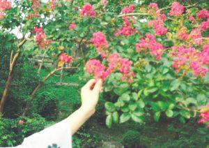 秋の京都 | 「らぼっと・わーくす」は京都,滋賀,大阪のエクステリア、ガーデニングを中心に外構・お庭工事のデザイン、設計、施工管理を一貫して行うエクステリア専門店です。
