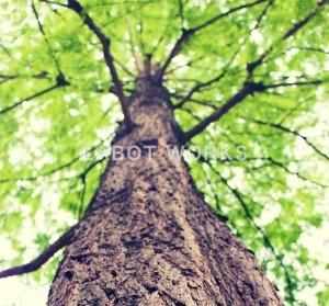 京都 LABOT - lab-t.com - 笑顔の木。 -