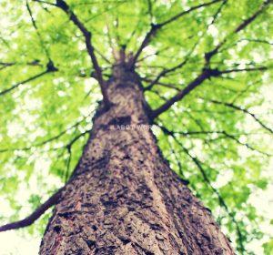 笑顔の木。 | 「らぼっと・わーくす」は京都,滋賀,大阪のエクステリア、ガーデニングを中心に外構・お庭工事のデザイン、設計、施工管理を一貫して行うエクステリア専門店です。