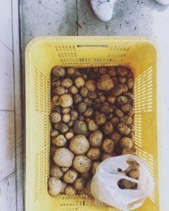 京都 LABOT - lab-t.com - 製茶工場とジャガイモと企画と。 -