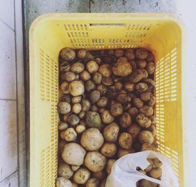 LABOT::製茶工場とジャガイモと企画と。