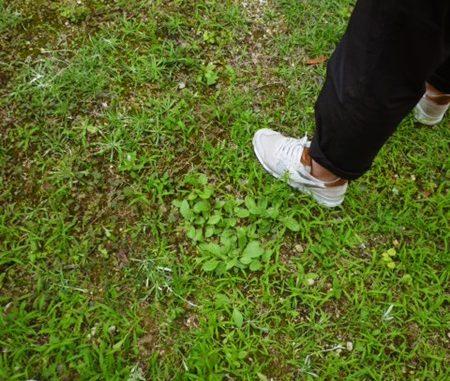 LABOT::右京区。お庭の現場調査へ。