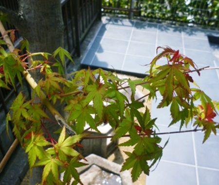 LABOT::中庭に和風の造作を@伏見区
