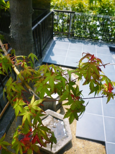 京都 LABOT - lab-t.com - 中庭に和風の造作を@伏見区 -