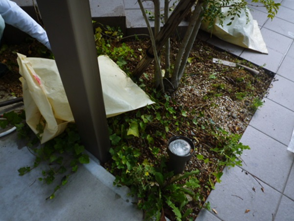 京都 LABOT - lab-t.com - と、言うワケで植え込み部分を綺麗にしてきました。 -