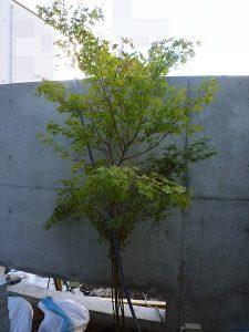 京都 LABOT - lab-t.com - P1060623 -