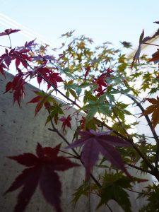 京都 LABOT - lab-t.com - P1070040 -