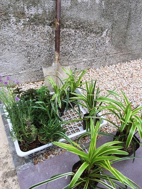 京都 LABOT - lab-t.com - 色んな想いを込めて、植栽の植え込み工程に参加しています。 -