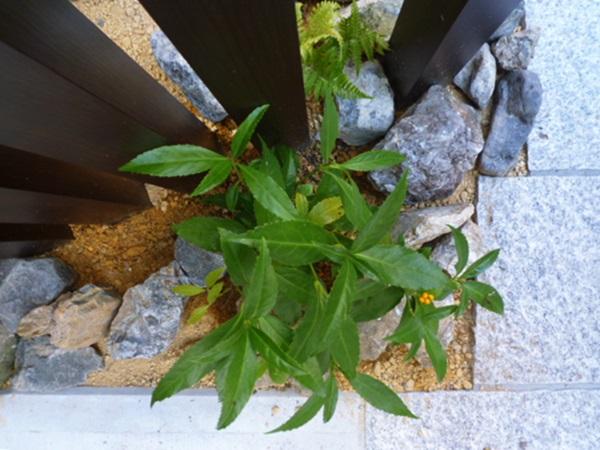 京都 LABOT - lab-t.com - 和風の植栽を植え込みに。 -