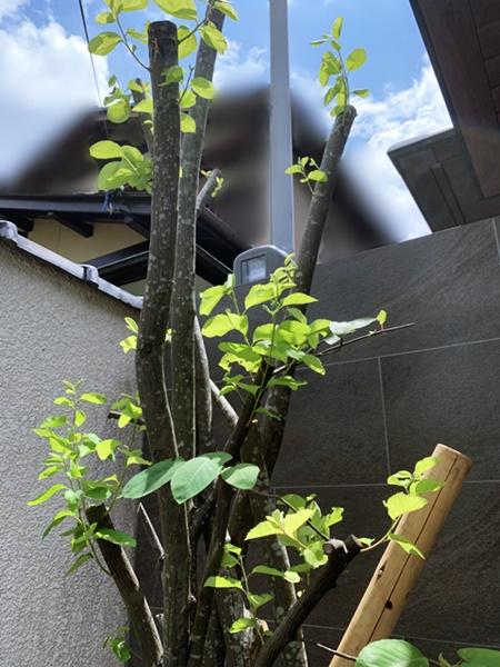京都 LABOT - lab-t.com - 山科区M様邸の外構リフォーム工事完成しました! -
