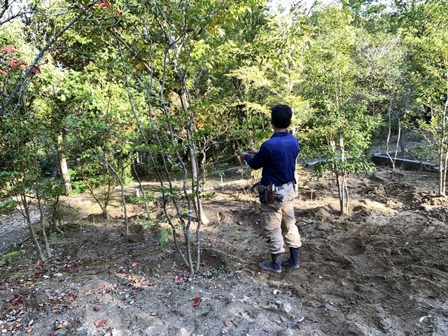 京都 LABOT - lab-t.com - 植木の買い付けに農園へ -