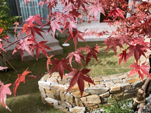 LABOT::シンボルツリー、綺麗に紅葉してるね!