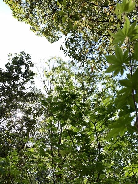 京都 LABOT - lab-t.com - またまた植栽の買い付けへ -