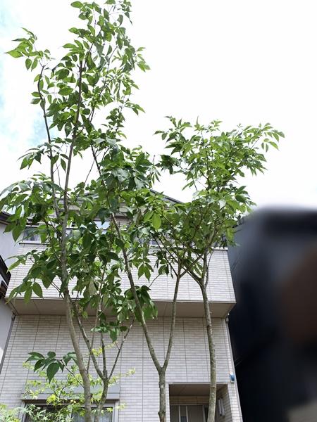 京都 LABOT - lab-t.com - 植栽工事の様子@北区M様邸 -