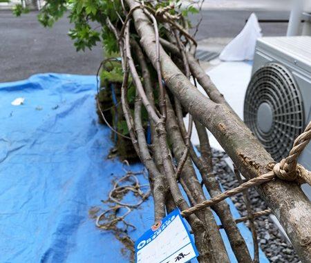 LABOT::4Mのシンボルツリー@長岡京市Y様邸
