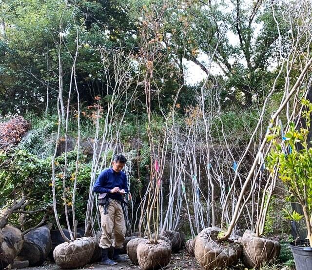 京都 LABOT - lab-t.com - 植木バサミのお手入れをしとかなきゃな。 -